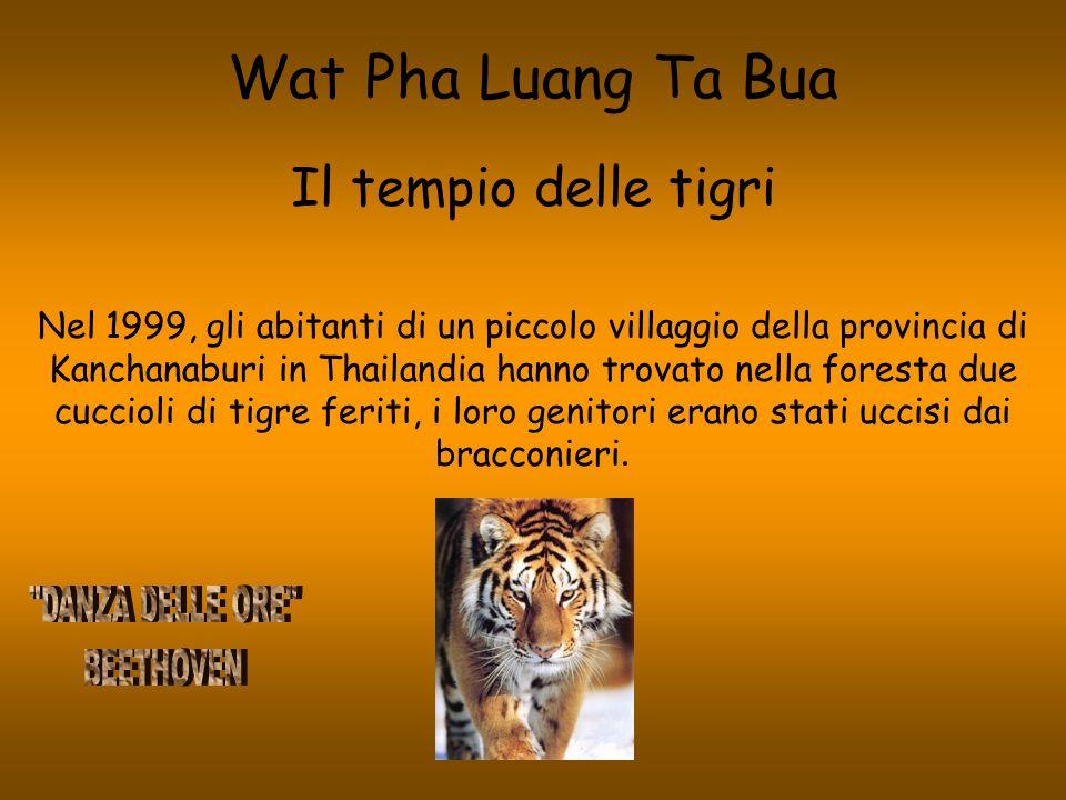 Wat Pha Luang Ta Bua Il tempio delle tigri