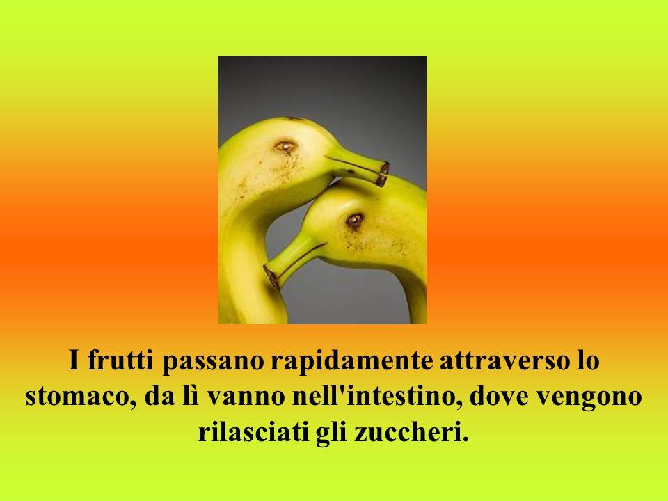 I frutti passano rapidamente attraverso lo stomaco, da lì vanno nell intestino, dove vengono rilasciati gli zuccheri.