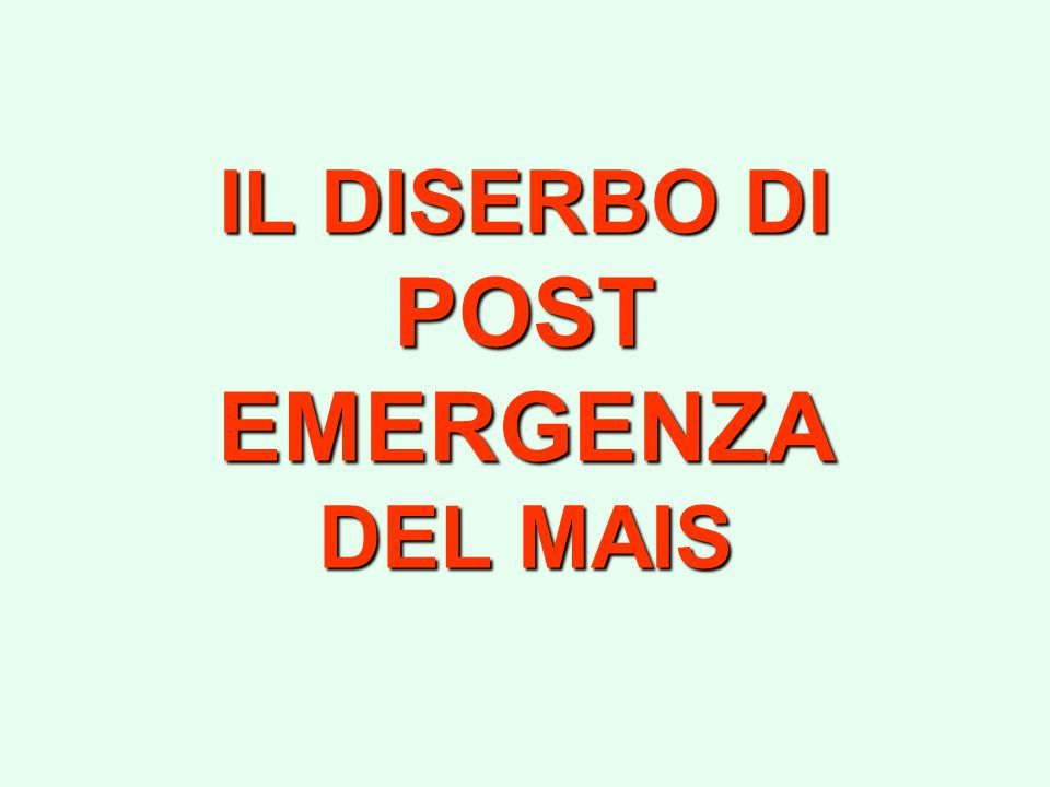 IL DISERBO DI POST EMERGENZA DEL MAIS