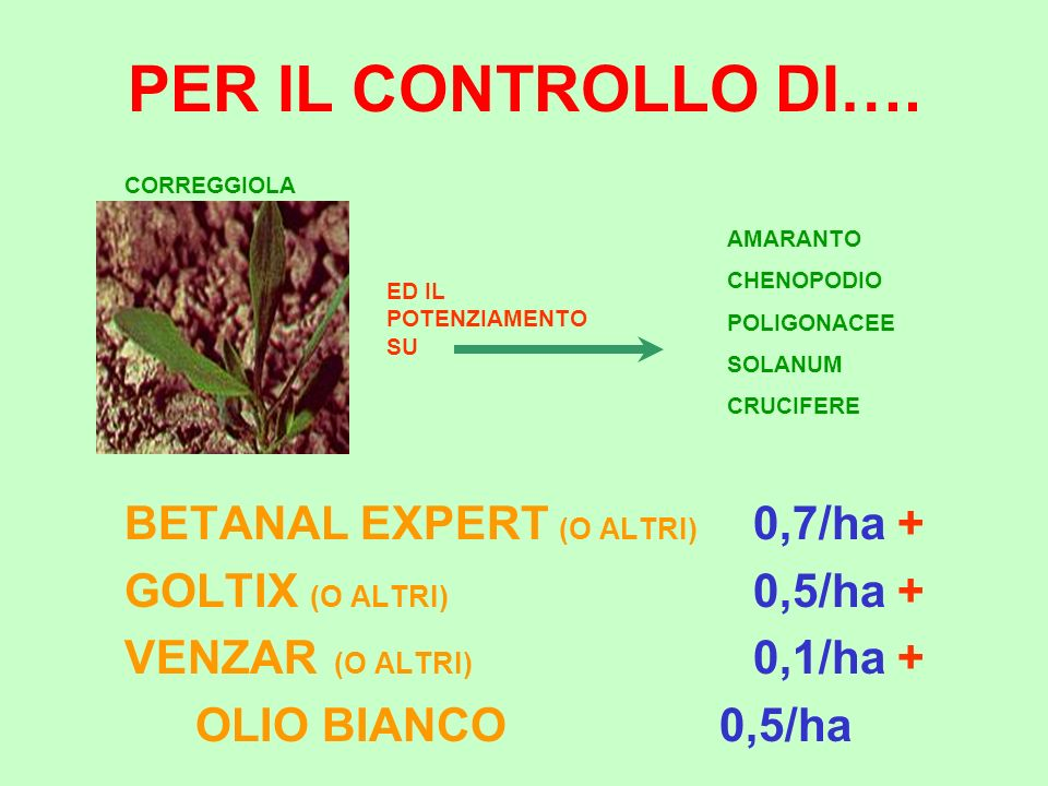 BETANAL EXPERT (O ALTRI) 0,7/ha +