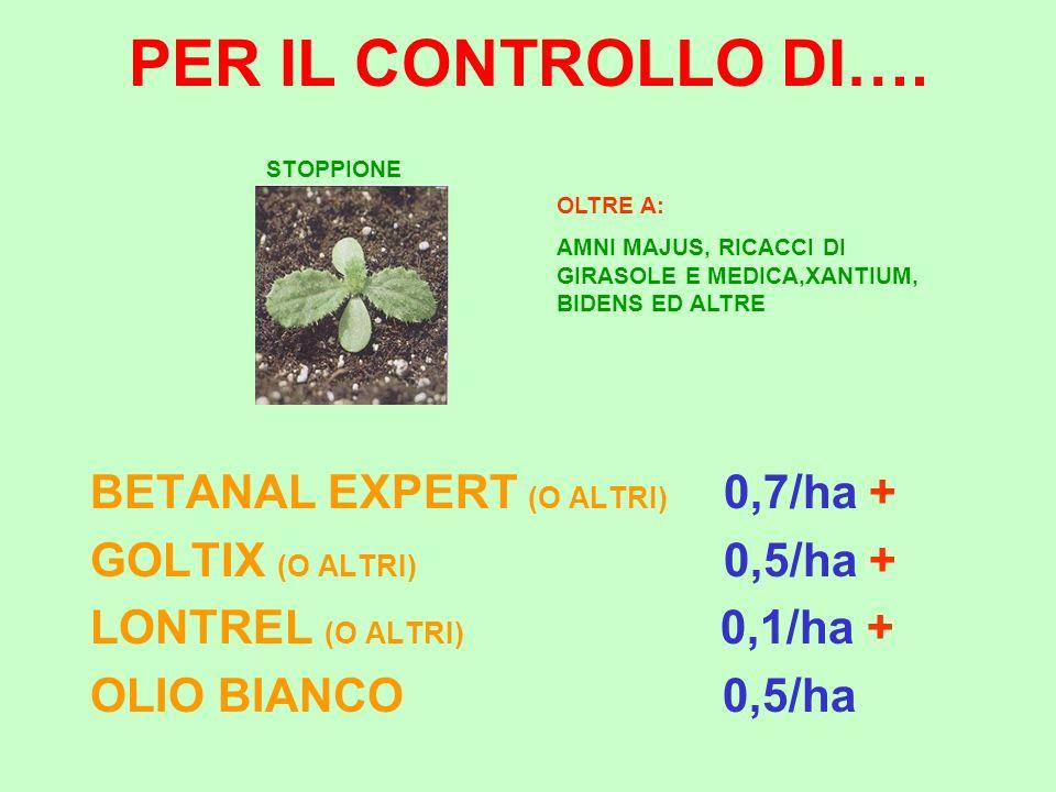 PER IL CONTROLLO DI…. BETANAL EXPERT (O ALTRI) 0,7/ha +
