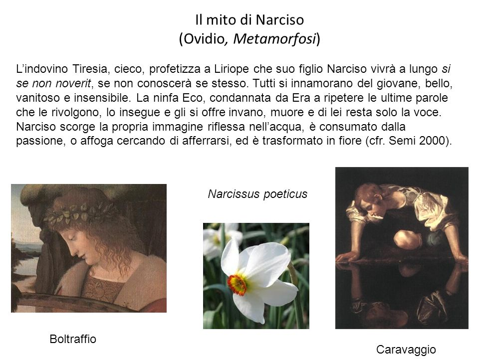 Il mito di Narciso (Ovidio, Metamorfosi)