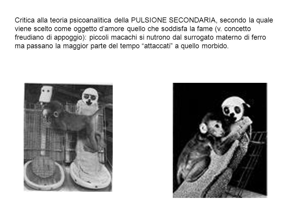 Critica alla teoria psicoanalitica della PULSIONE SECONDARIA, secondo la quale viene scelto come oggetto d'amore quello che soddisfa la fame (v.