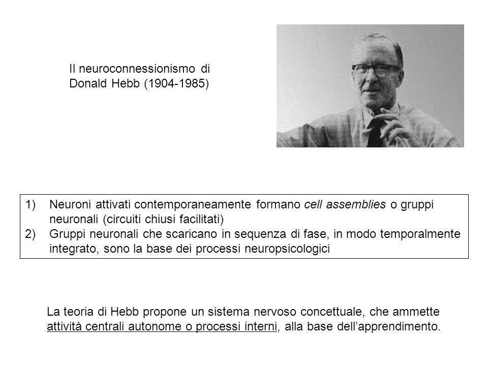 Il neuroconnessionismo di Donald Hebb (1904-1985)