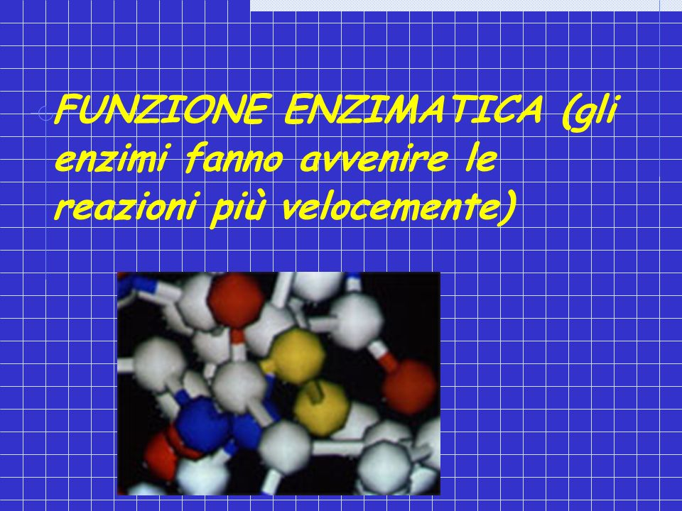FUNZIONE ENZIMATICA (gli enzimi fanno avvenire le reazioni più velocemente)