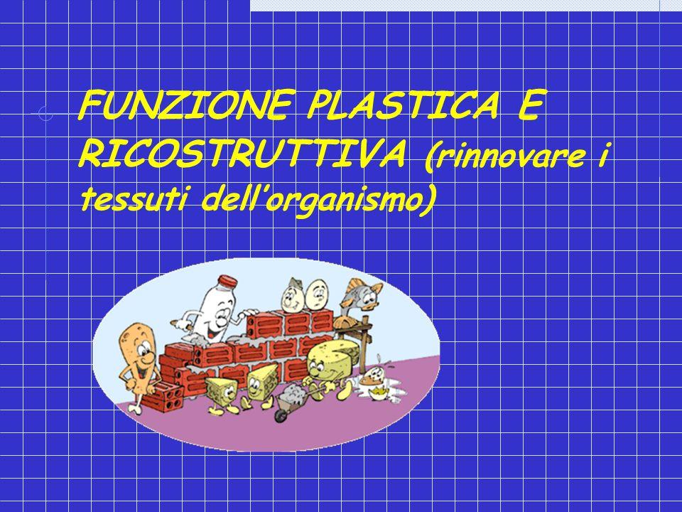 FUNZIONE PLASTICA E RICOSTRUTTIVA (rinnovare i tessuti dell'organismo)