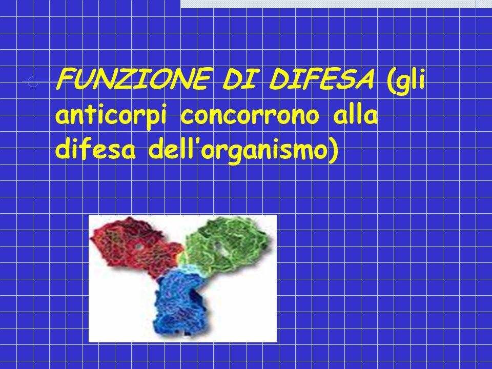 FUNZIONE DI DIFESA (gli anticorpi concorrono alla difesa dell'organismo)