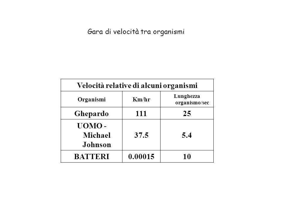 Velocità relative di alcuni organismi Lunghezza organismo/sec