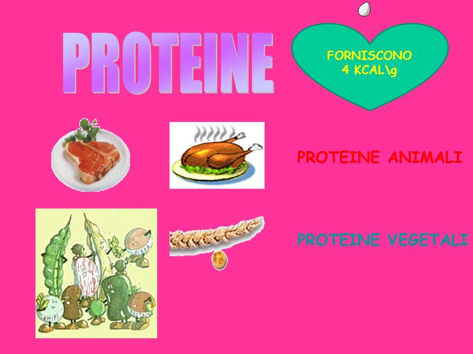 FORNISCONO 4 KCAL\g PROTEINE PROTEINE ANIMALI PROTEINE VEGETALI