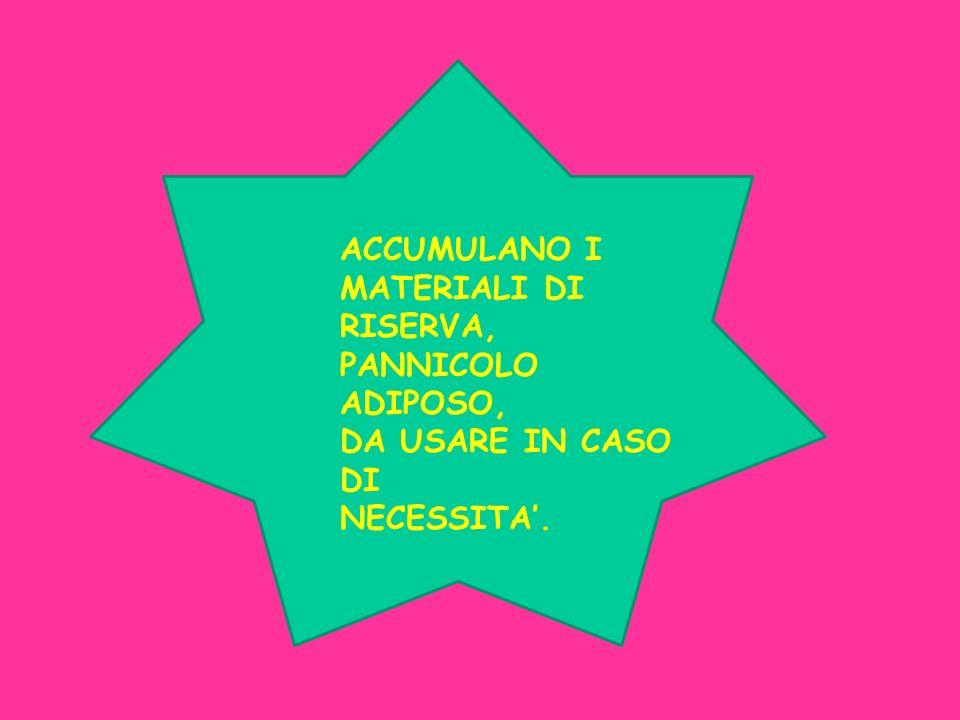 ACCUMULANO I MATERIALI DI RISERVA, PANNICOLO ADIPOSO, DA USARE IN CASO DI NECESSITA'.