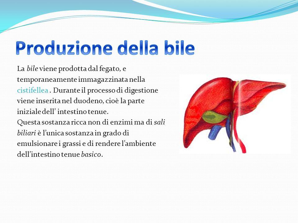 Produzione della bile