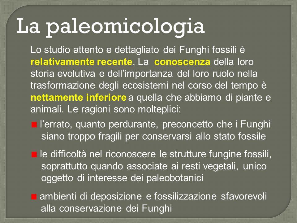 La paleomicologia