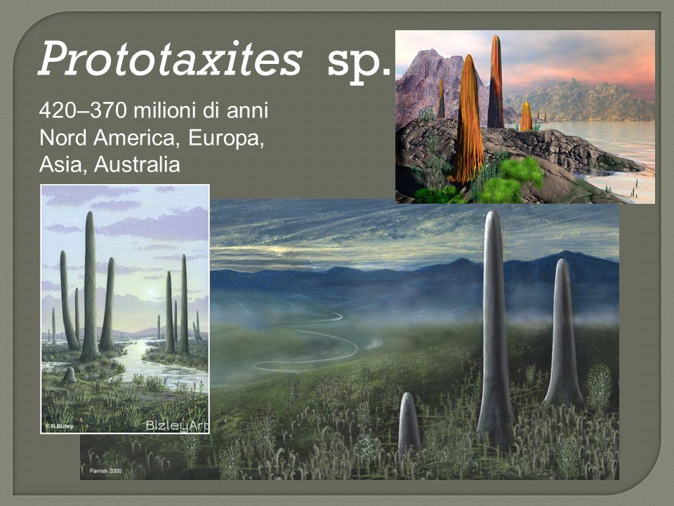 Prototaxites sp. 420–370 milioni di anni Nord America, Europa, Asia, Australia