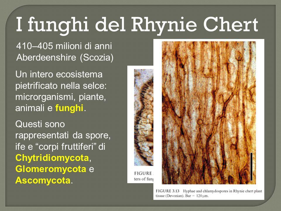 I funghi del Rhynie Chert