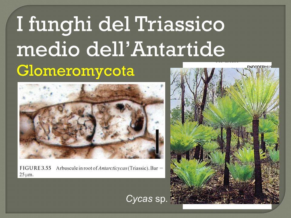 I funghi del Triassico medio dell'Antartide