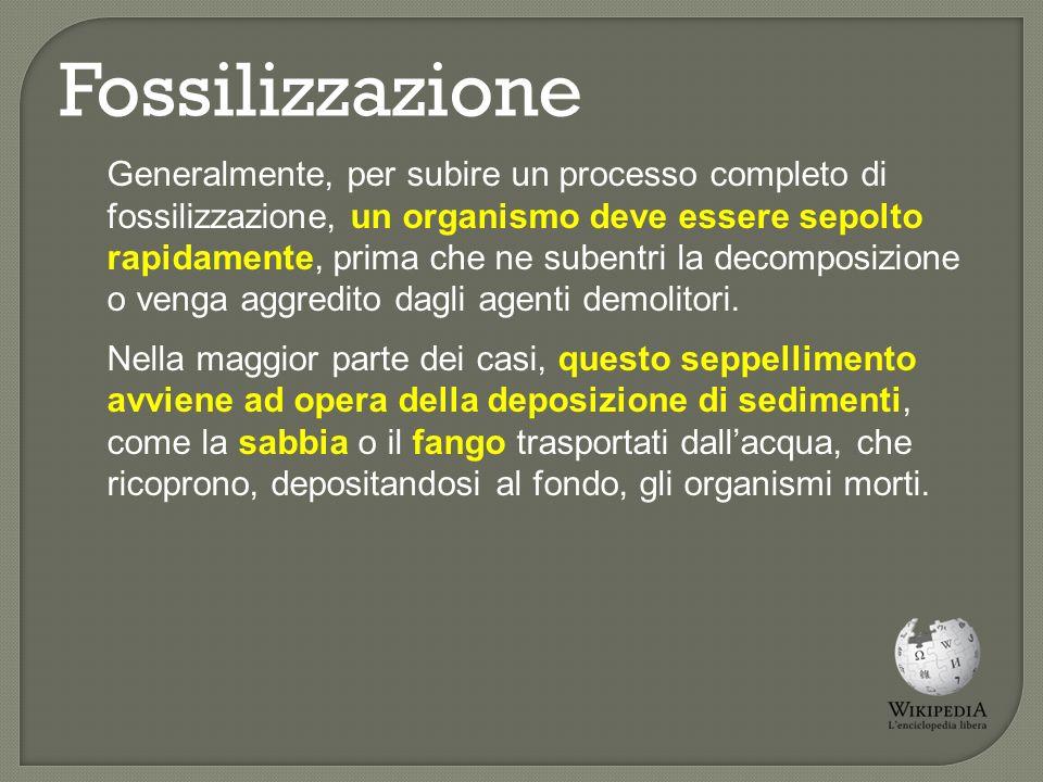 Fossilizzazione