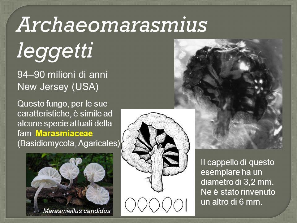 Archaeomarasmius leggetti