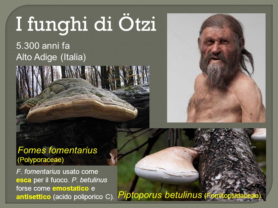 I funghi di Ötzi 5.300 anni fa Alto Adige (Italia)