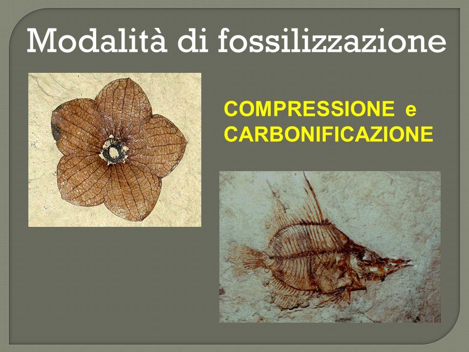 Modalità di fossilizzazione