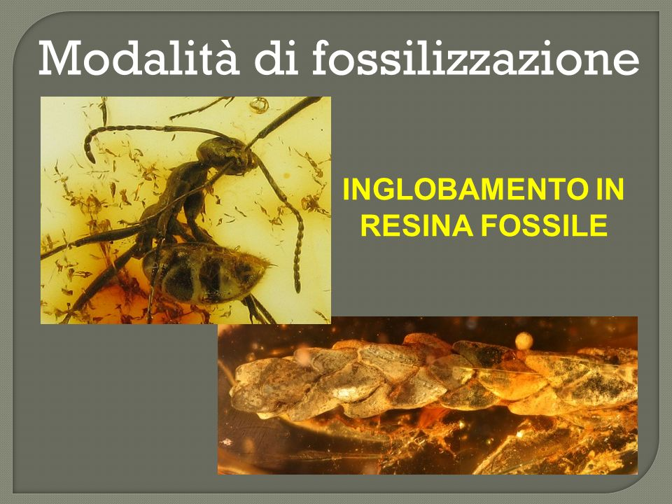 INGLOBAMENTO IN RESINA FOSSILE