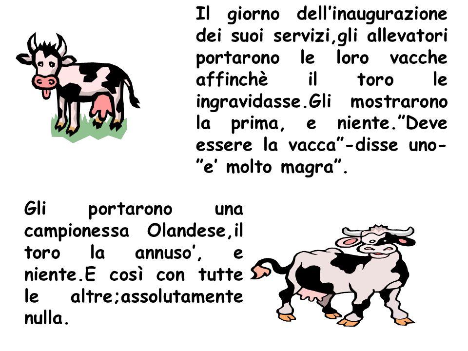 Il giorno dell'inaugurazione dei suoi servizi,gli allevatori portarono le loro vacche affinchè il toro le ingravidasse.Gli mostrarono la prima, e niente. Deve essere la vacca -disse uno- e' molto magra .