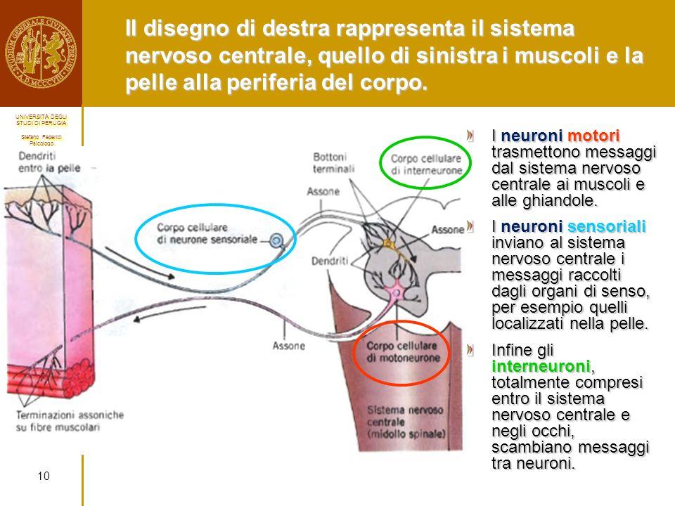 Il disegno di destra rappresenta il sistema nervoso centrale, quello di sinistra i muscoli e la pelle alla periferia del corpo.