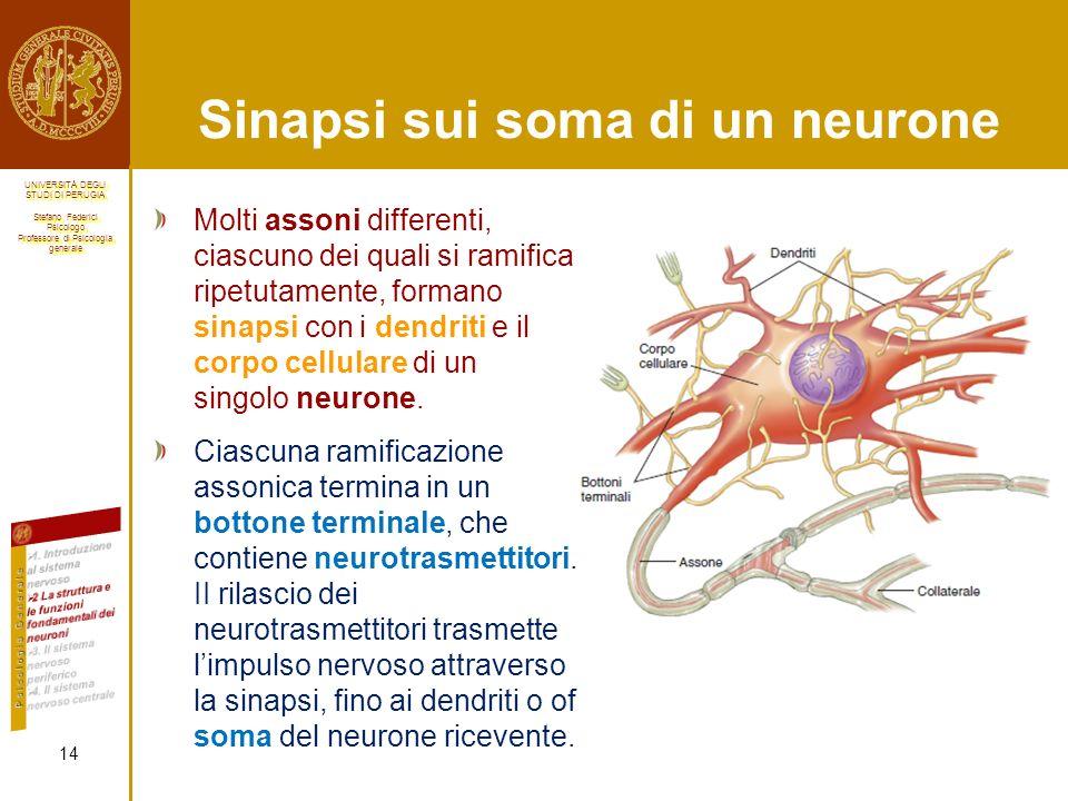 Sinapsi sui soma di un neurone