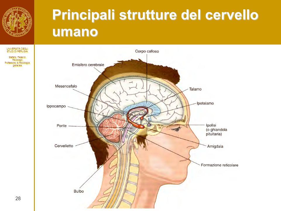 Principali strutture del cervello umano