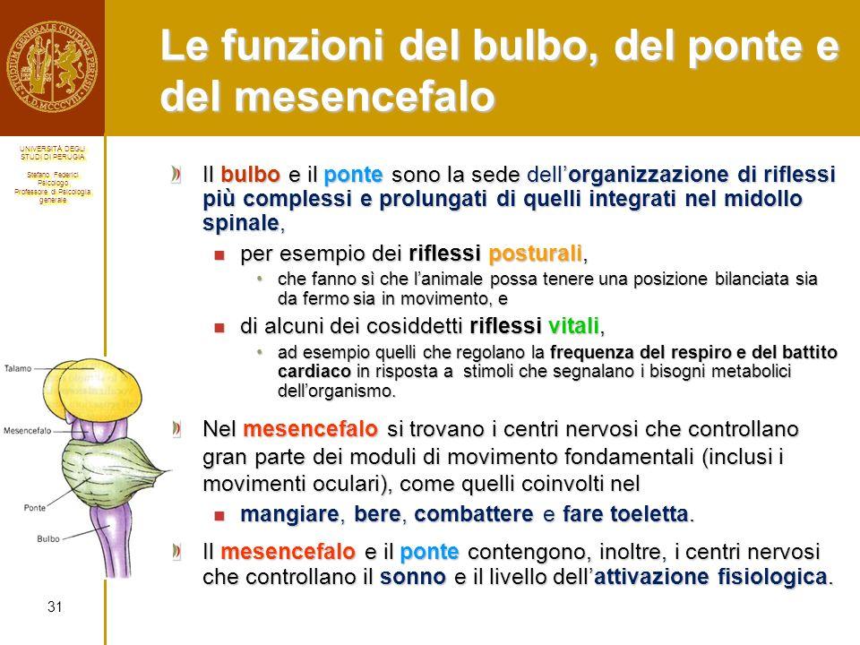 Le funzioni del bulbo, del ponte e del mesencefalo