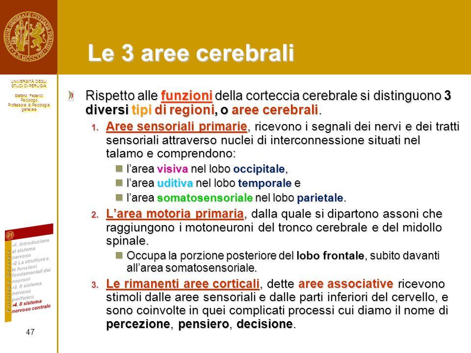 Le 3 aree cerebrali Rispetto alle funzioni della corteccia cerebrale si distinguono 3 diversi tipi di regioni, o aree cerebrali.