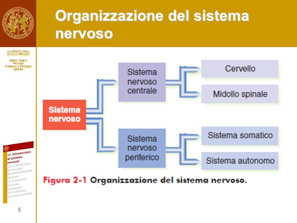 Organizzazione del sistema nervoso