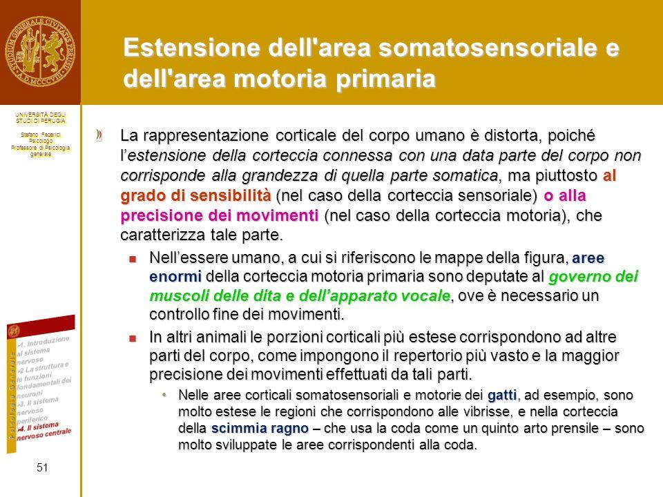 Estensione dell area somatosensoriale e dell area motoria primaria