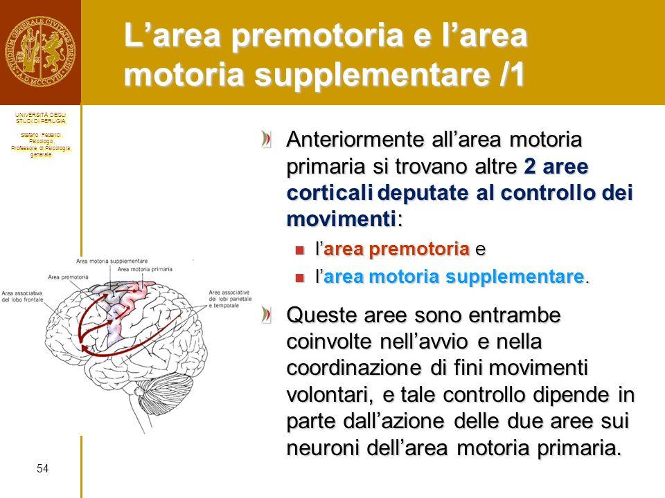 L'area premotoria e l'area motoria supplementare /1