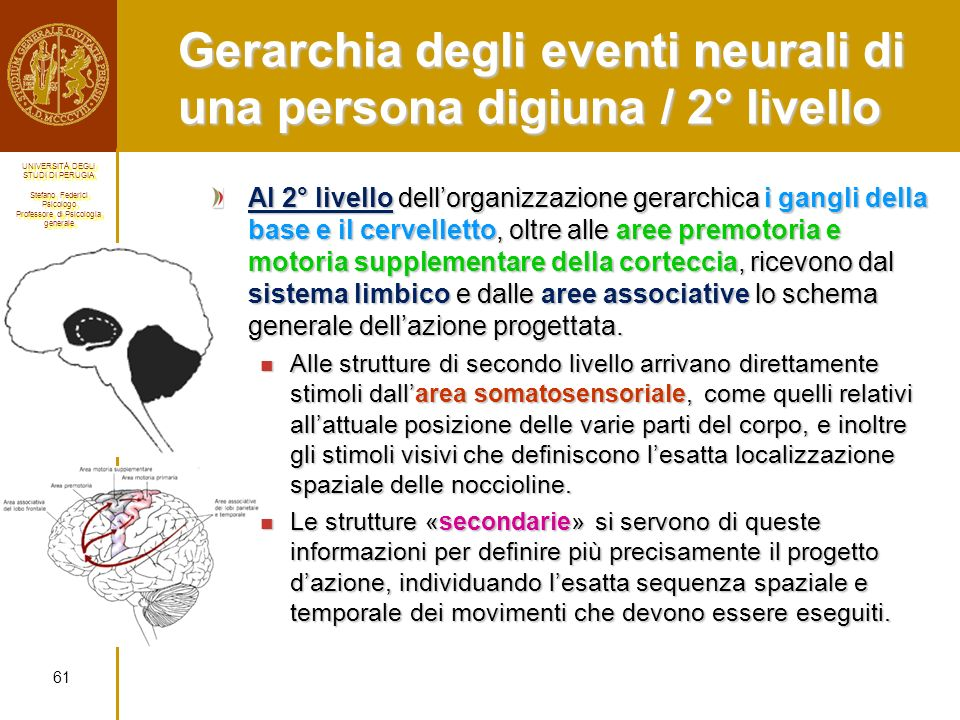 Gerarchia degli eventi neurali di una persona digiuna / 2° livello