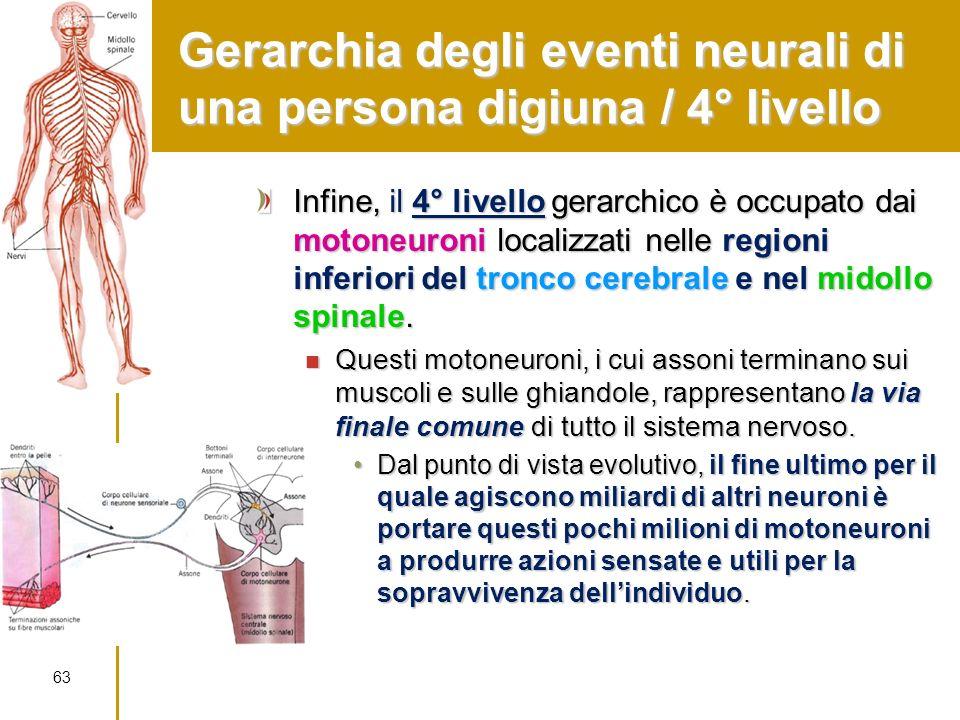 Gerarchia degli eventi neurali di una persona digiuna / 4° livello