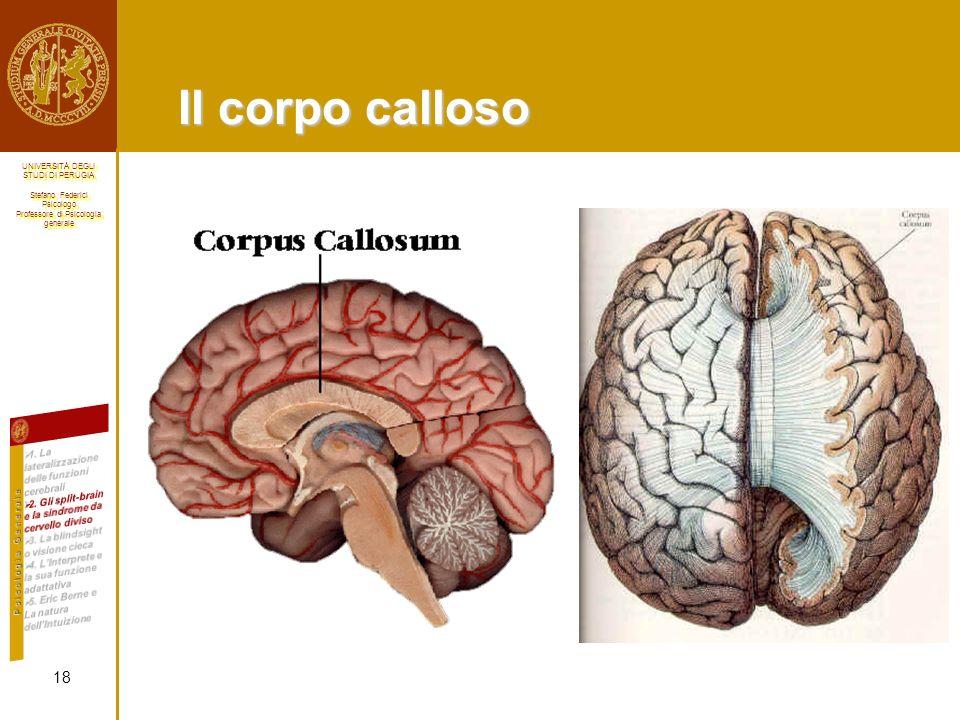 Il corpo calloso 1. La lateralizzazione delle funzioni cerebrali