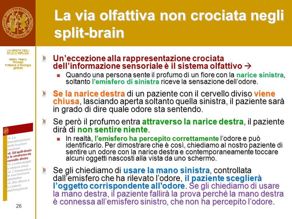 La via olfattiva non crociata negli split-brain