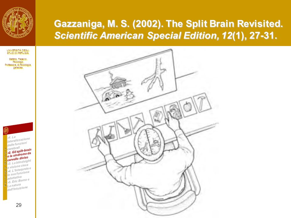 Gazzaniga, M. S. (2002). The Split Brain Revisited