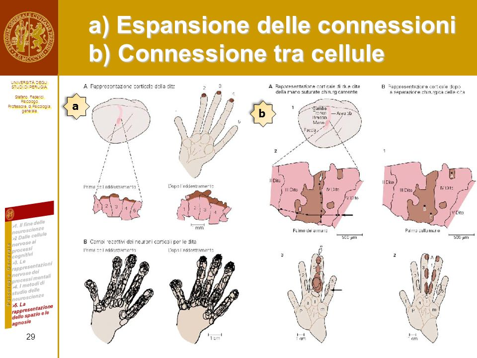 a) Espansione delle connessioni b) Connessione tra cellule