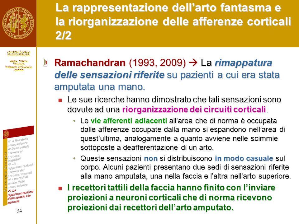 La rappresentazione dell'arto fantasma e la riorganizzazione delle afferenze corticali 2/2