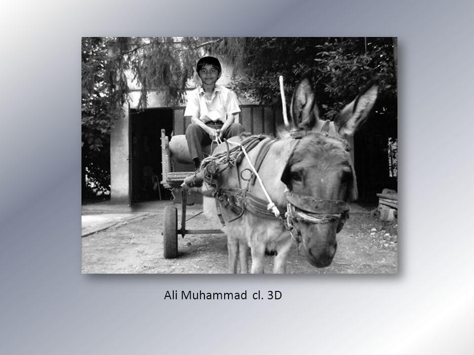 Ali Muhammad cl. 3D
