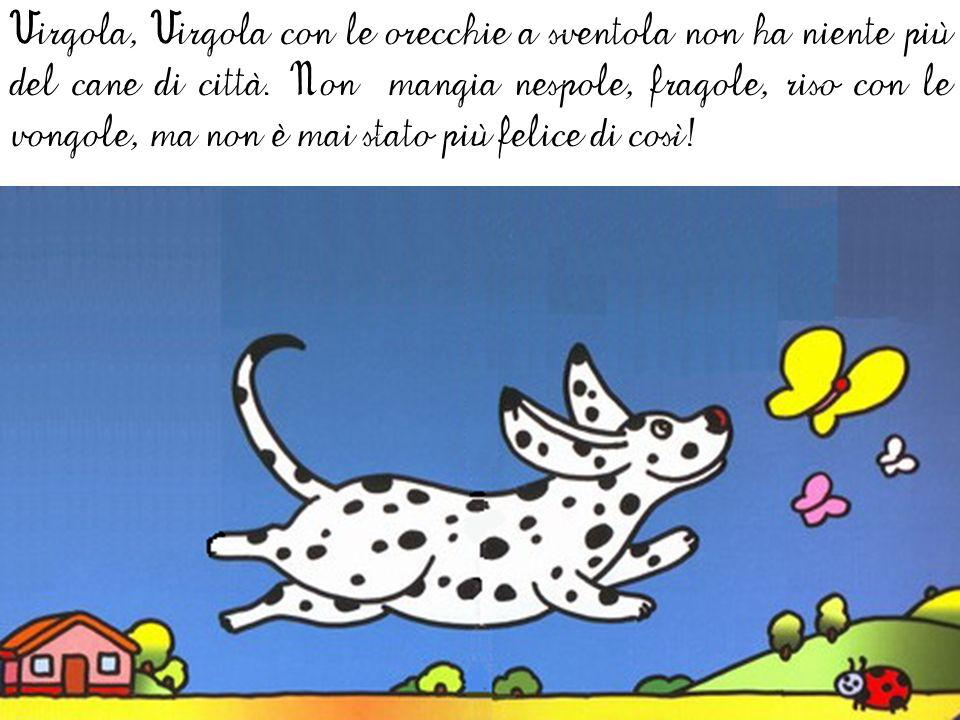 Virgola, Virgola con le orecchie a sventola non ha niente più del cane di città.