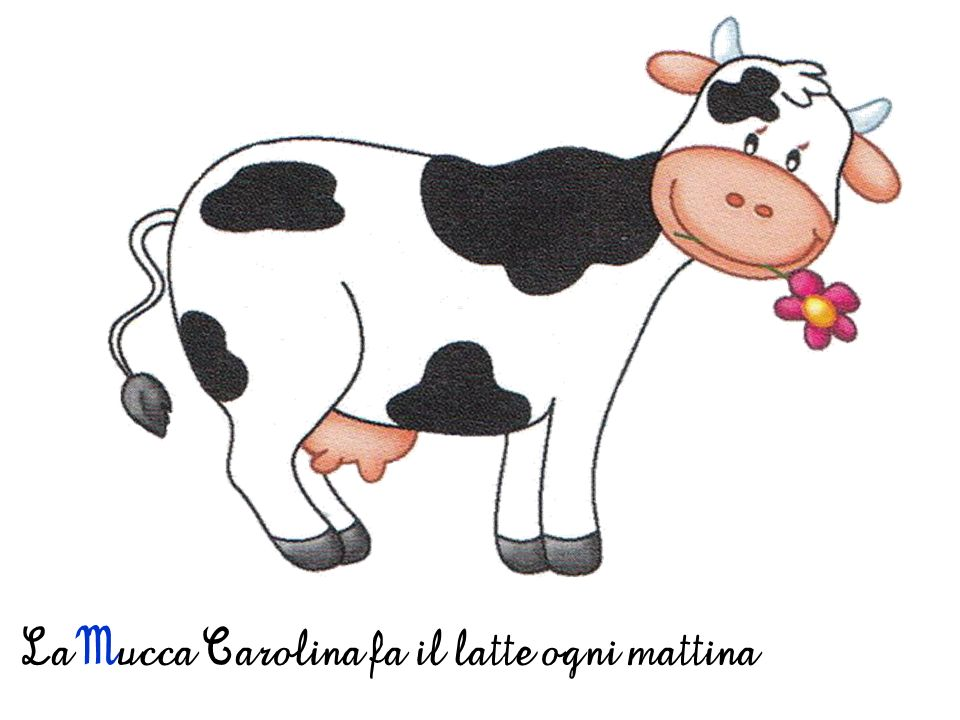 La Mucca Carolina fa il latte ogni mattina