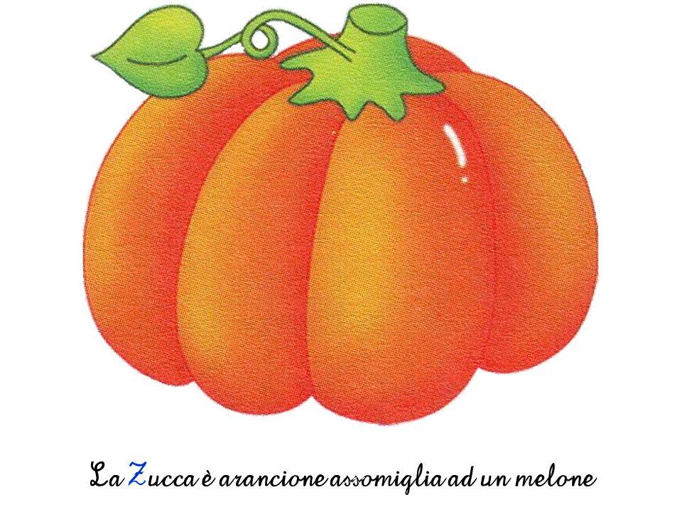 La Zucca è arancione assomiglia ad un melone
