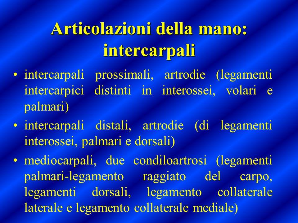 Articolazioni della mano: intercarpali