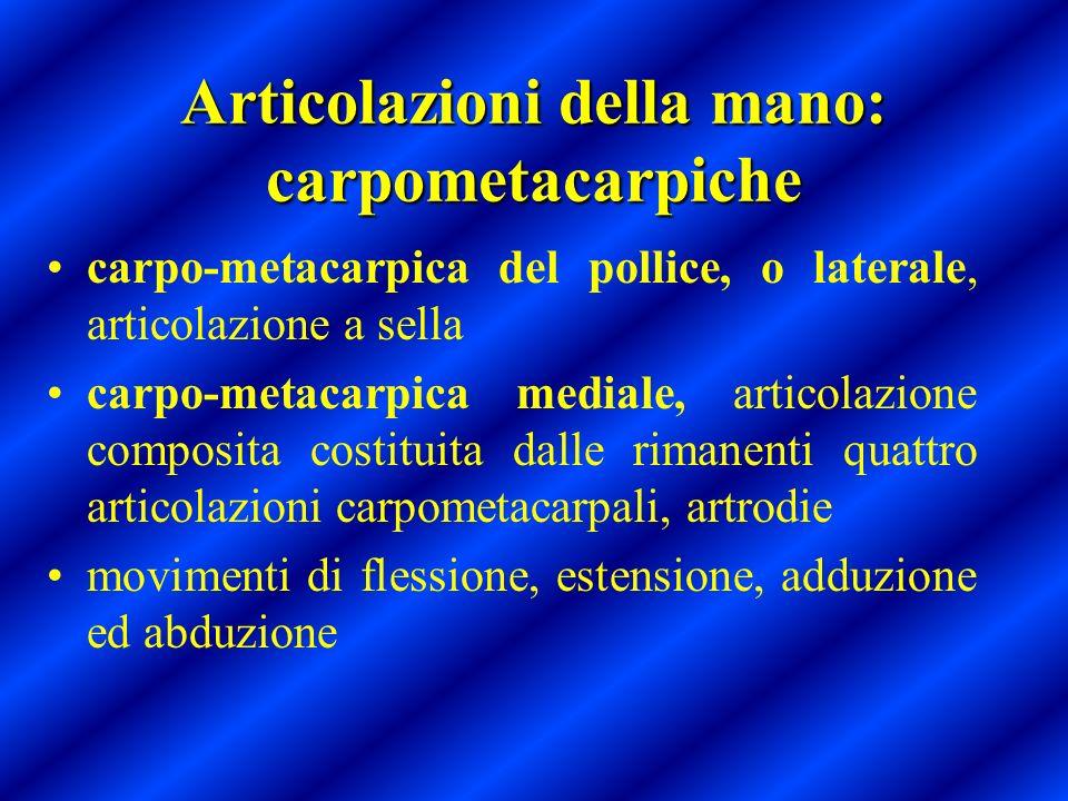 Articolazioni della mano: carpometacarpiche