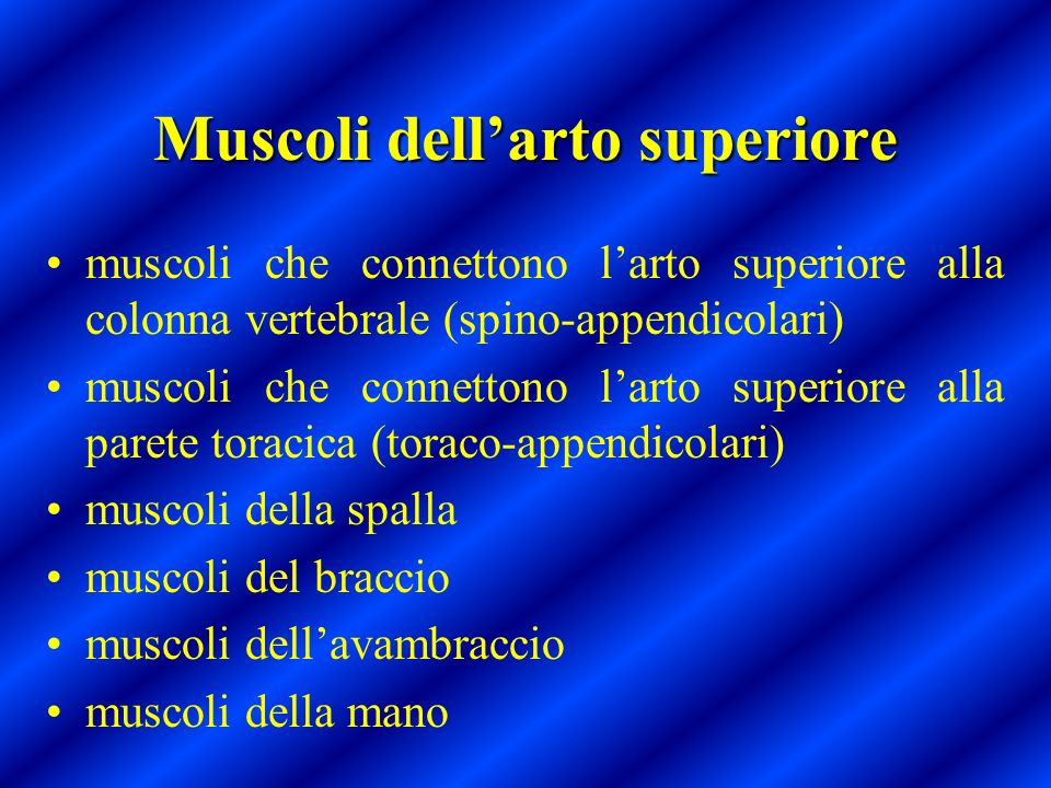 Muscoli dell'arto superiore