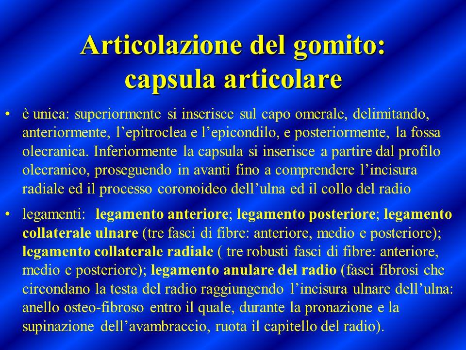 Articolazione del gomito: capsula articolare