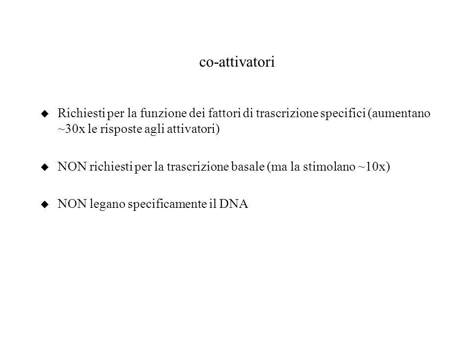 co-attivatori Richiesti per la funzione dei fattori di trascrizione specifici (aumentano ~30x le risposte agli attivatori)