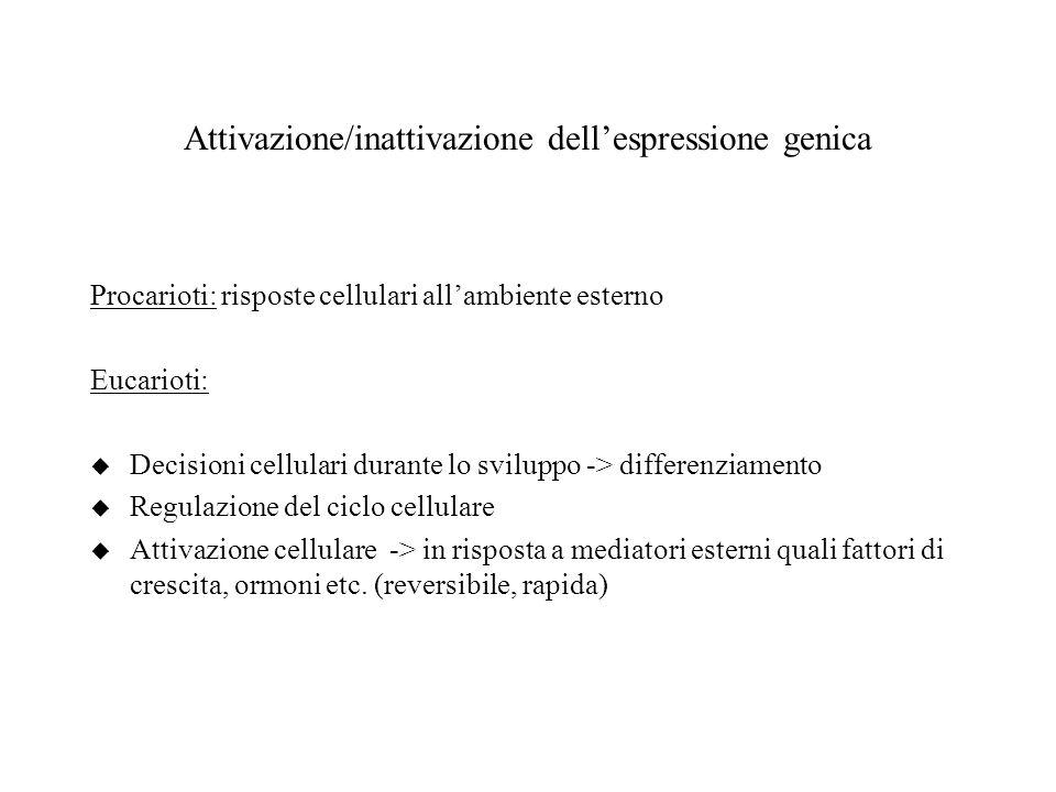 Attivazione/inattivazione dell'espressione genica